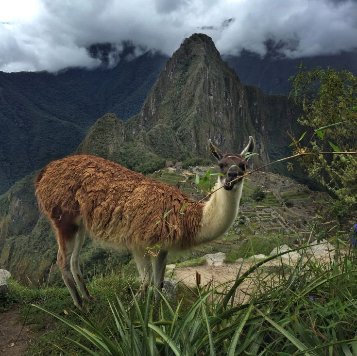Join us on a journey through Machu Picchu