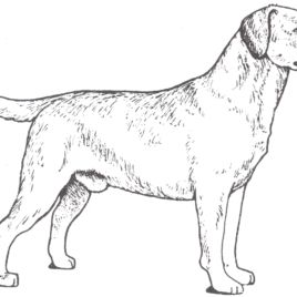 Cool Dog Coloring Pages For Kids 11 1870 Lab Dog Coloring