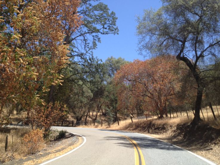 Driving California State Route 245, east of Kings Canyon and Sequoia National Park. Though it looks like fall, this picture was taken in June!
