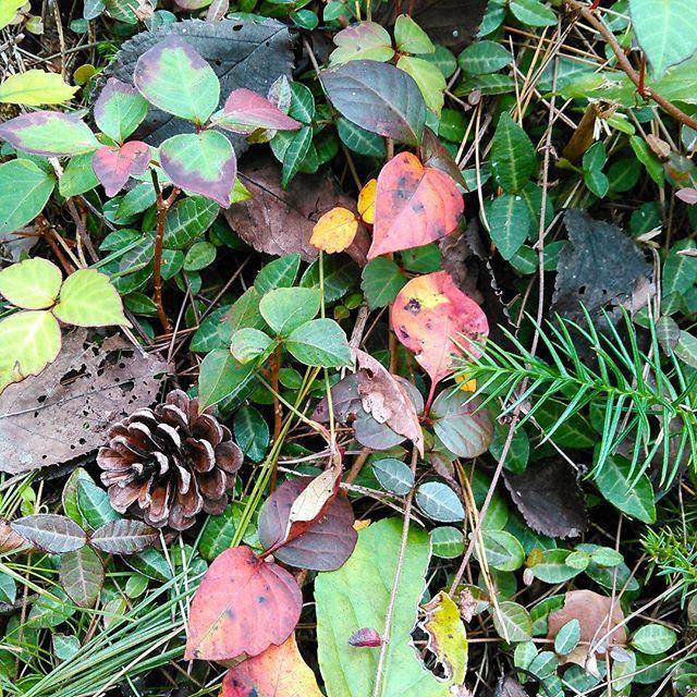 【born1125】さんのInstagramをピンしています。 《確かにカモシカを観た… しかし写真を撮影出来なかったので説得力が無い(^^; 猪の足跡、カモシカ、熊の目撃情報も出たようなので 熊避けの鈴とか… そう…荒ぶる鷹の構え(鶴のポーズ)をマスターし、 頭に巻く豆絞りの手拭いは用意しておかなければ…(^^) #森 #葉っぱ #秋 #ベストキッド  #ダニエルさん #ミヤギさん  #リメイクも好き #荒ぶる鷹のポーズ #鶴のポーズ  #forest #autumn #autumnleaves  #karatekid #cranetechnique  #wildanimals #encounter》