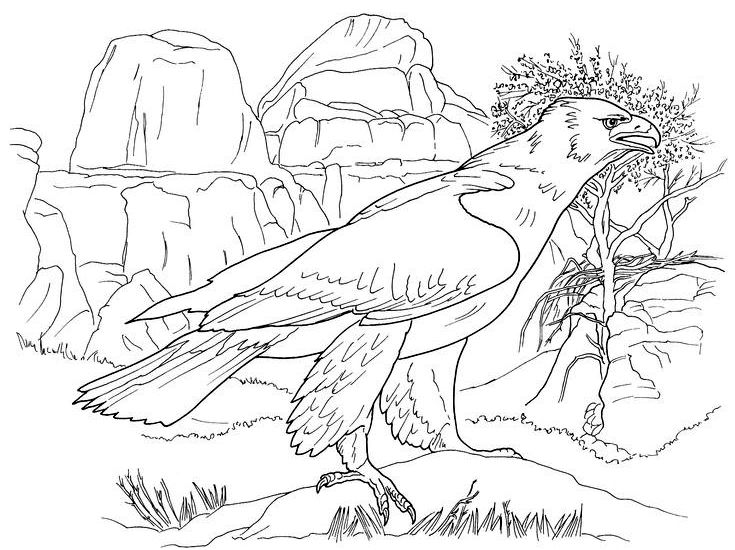 Best Eagle Coloring Pages For Kids