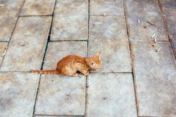 Check out Small street red kitten by odpium on Creative Market