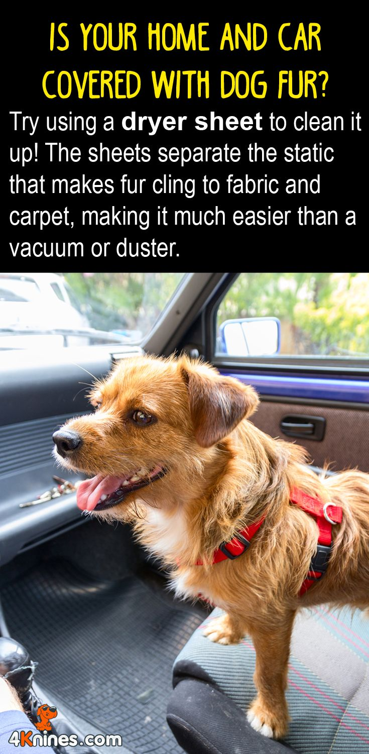 When it comes to dog hair, dryer sheets can do wonders! Use dryer sheets for all kinds of surfaces in your home and car that are covered in hair. Once you're finished, your 4Knines Car Seat Cover will ensure your car seats stay fur-free: http://4knines.com/collections/all