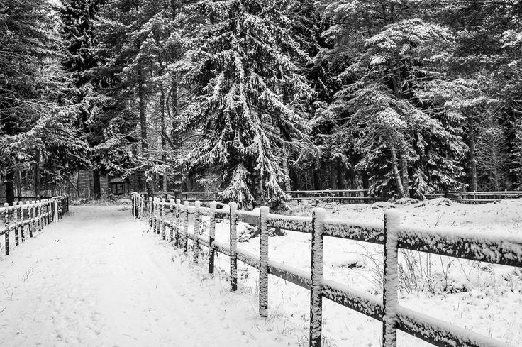 Winterland by Kisun Pokharel on 500px