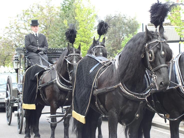 Four Black Horses Pulling a Black Funeral Carriage. (Horse Drawn Hearses).