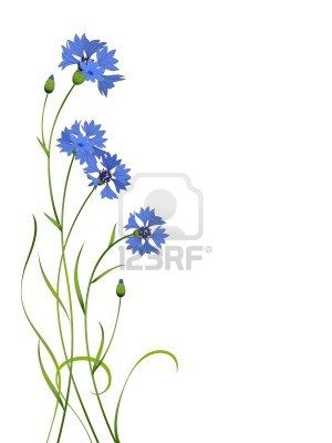 blue cornflower flower, this would make a great tattoo, especially if it had little petals floating off it like the dandelion tattoos