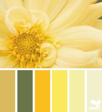 Design Seeds: Color palettes perfect for decorating and for family photo outfits!