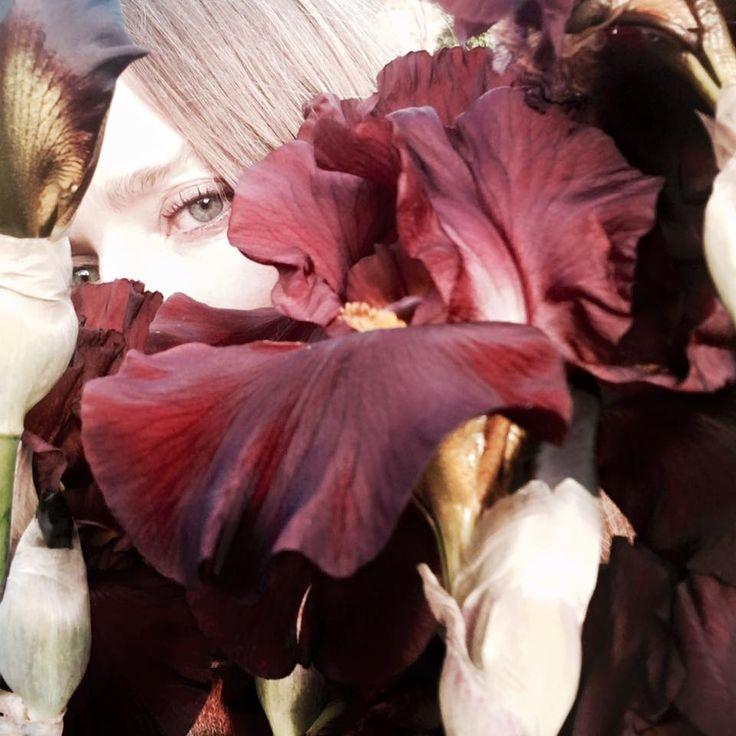 Iris Inspiring X Stella