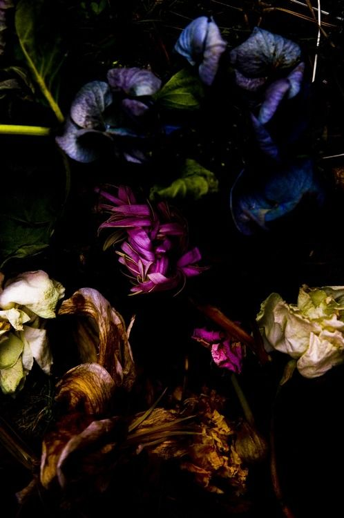 Moss and lime green, blue, violet, magenta, gold, lavender, white, brown, burgundy and black - Photo by Takashi Mori
