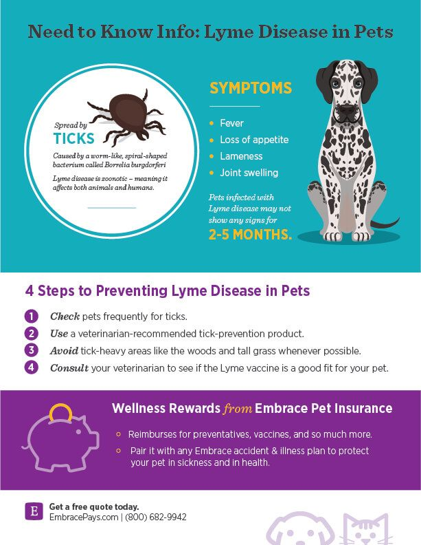 Pin On Health Tips For Pet Parents