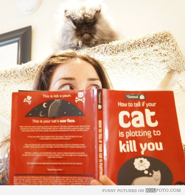 """Funny photo of a girl reading scary book, """"How to tell if your cat is plotting to kill you"""" while the ugly cat """"Colonel Meow"""" is watching her from above."""