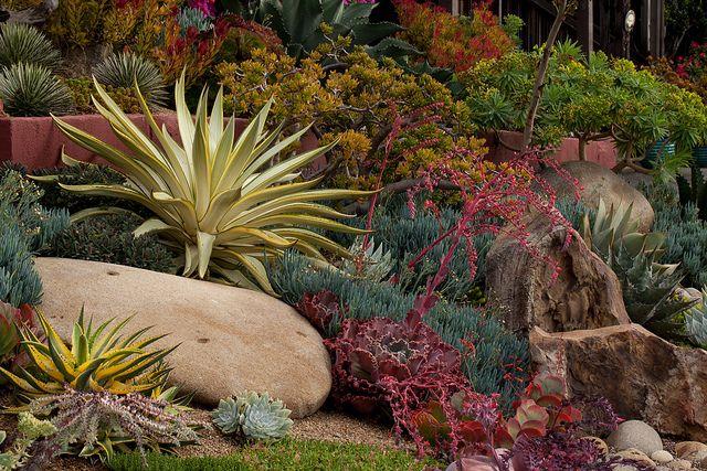 ideas about Succulent Rock Garden on Pinterest
