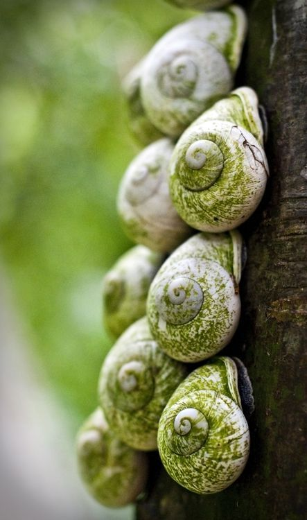 Green | Grün | Verde | Grøn | Groen | 緑 | Emerald | Colour | Texture | Style | Form | Pattern | Snails on a tree (Photo by Tiffany Jones)