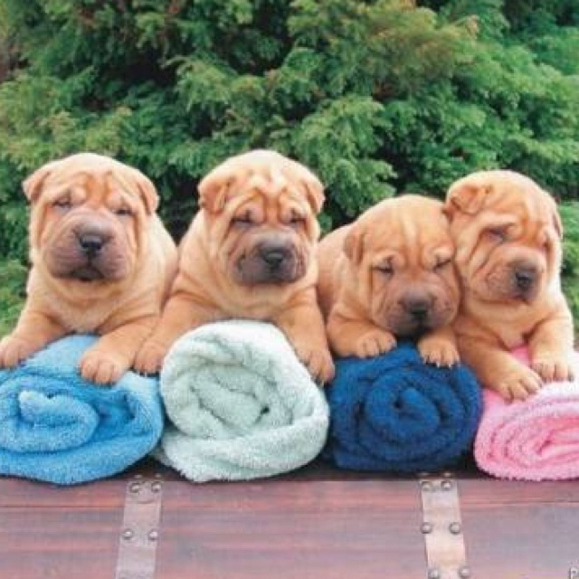 i need these puppies