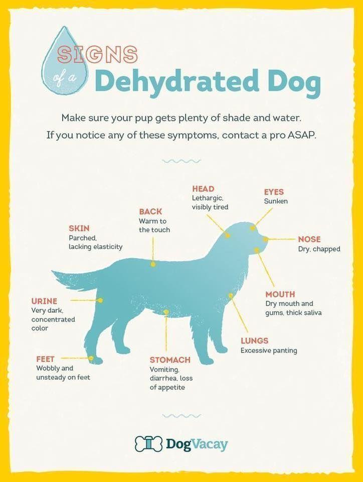 SIGNS - DEHYDRATED DOG #puppytraininghacks #doghacks