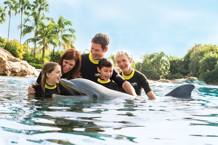 Wade into Dolphin Lagoon to swim, play, hug and feed the dolphins.