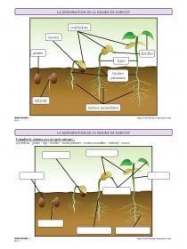 Librairie-Interactive - La germination - vocabulaire