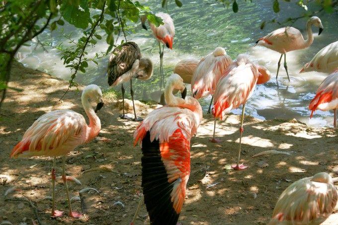 güzel kuşlar.  Bölüm 1 19
