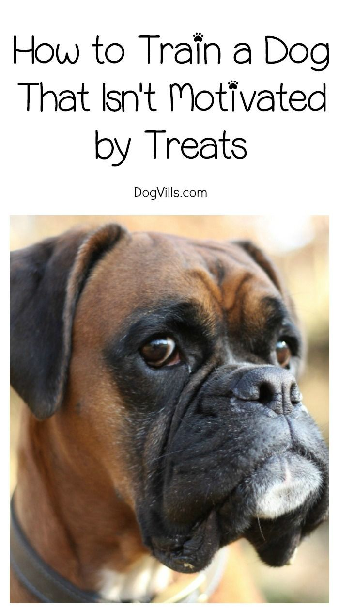 How To Train A Dog Who S Not Treat Motivated Dog Training Tips