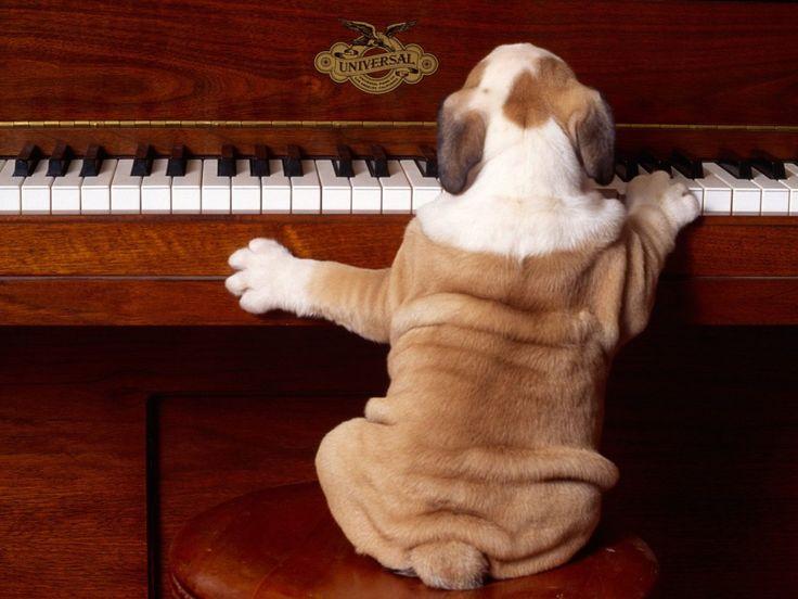 Η   ΕΦΗΜΕΡΙΔΑ   ΤΩΝ    ΣΚΥΛΩΝ: Πως επιδρά η κλασσική μουσική στα ζώα