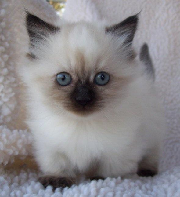 33 Best My Past Kittens Images On Pinterest Baby Kittens