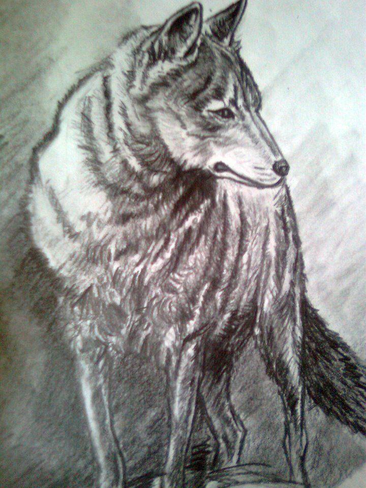 Wolf 2012 by Geromorris