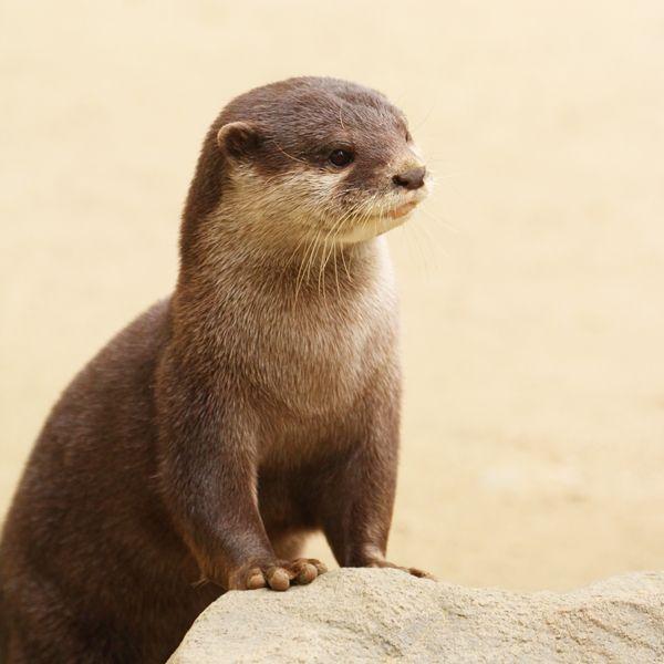otters :)