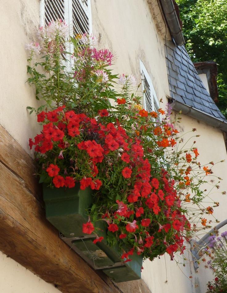 Jardinière d'été avec pétunias, cléomes et benoîtes