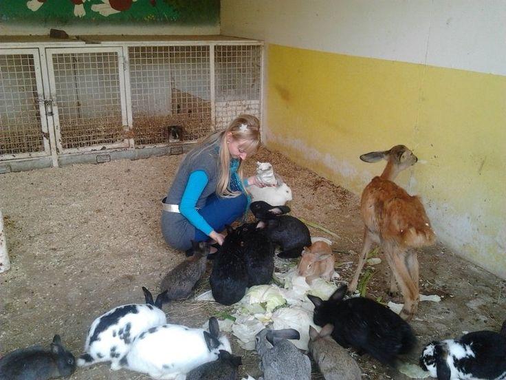Gyöngyösi Állatkert3