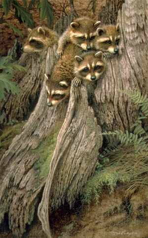 Bandits, (raccoons) i call them all Lucy and Ethel and friends...............lol they are so cute!