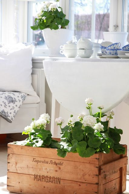 White geraniums.....my newest favorite accessory for decorating..