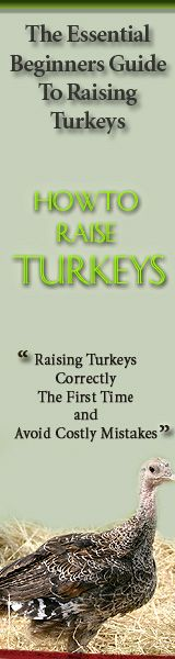 Click here to Learn How To Raise Turkey & Avoid Costly Mistakes!