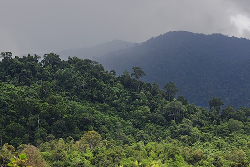 Ulu Masen forest, Aceh, Indonesia. The Ulu Masen forest ecosystem in the northern part of Indonesia's Aceh province forms part of the largest single forested area in South East Asia.