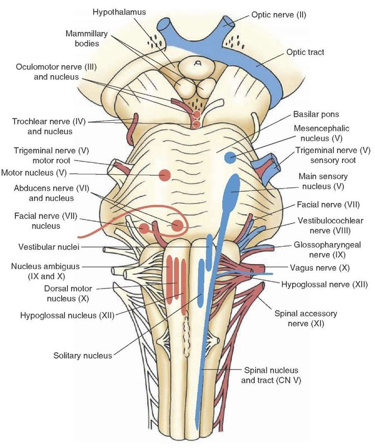 134 best Anatomy images on Pinterest | Human anatomy, Human body and ...