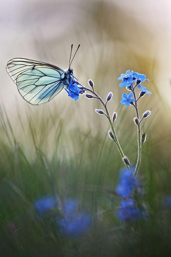 Ich suche die blaue Blume in den Tiefen deiner Seele, flieg hinfort mein schöner Schmetterling, bis unsere Wege sich wieder kreuzen.