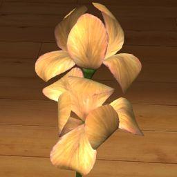 Irys żółty 3D