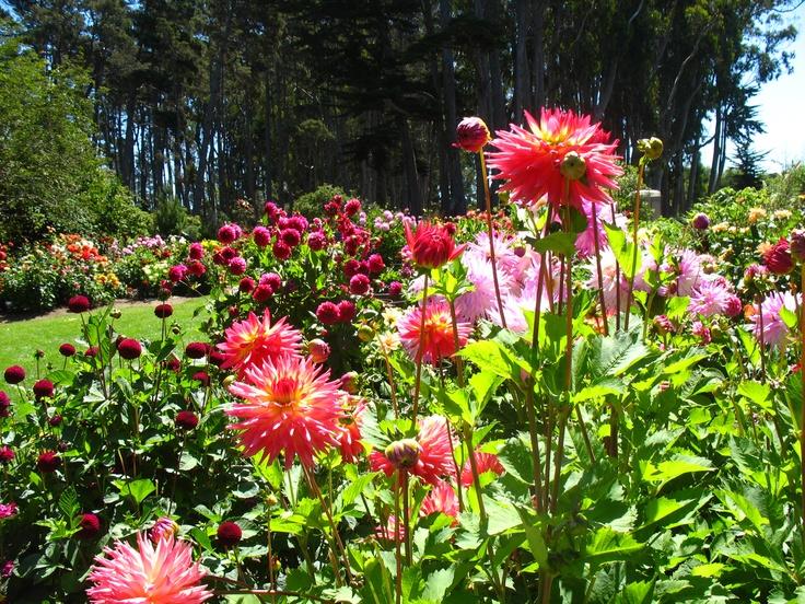 Mendocino Coast Botanical Garden Dahlias Where To Go In Fort Bragg California Pinterest