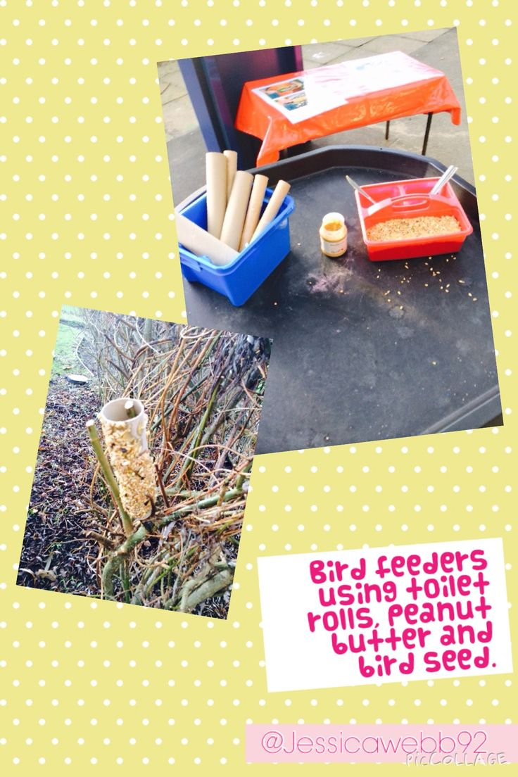 Making bird feeders using toilet roll tubes, peanut butter and bird seed.