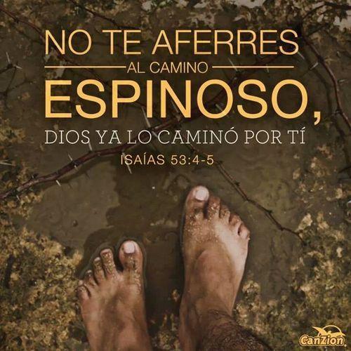 No te aferres al camino espinoso, Dios ya lo caminó por ti.
