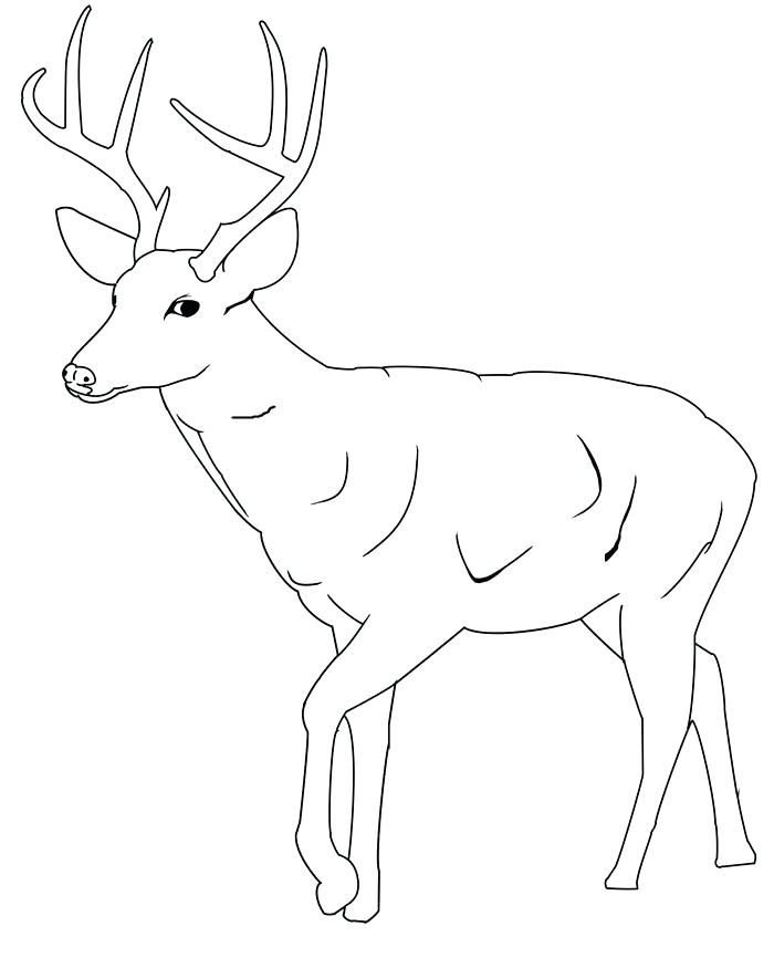 photo relating to Free Printable Deer Stencils identified as No cost Printable Deer Stencils Template  Noahs 9th