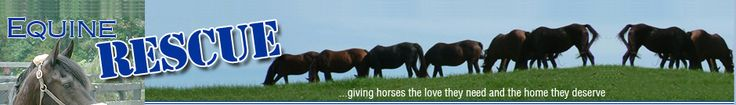 Equine Rescue, Walden, NY, care, rehabilitation and adoption for horses