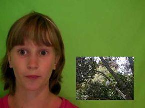 Using green screen on windows movie maker