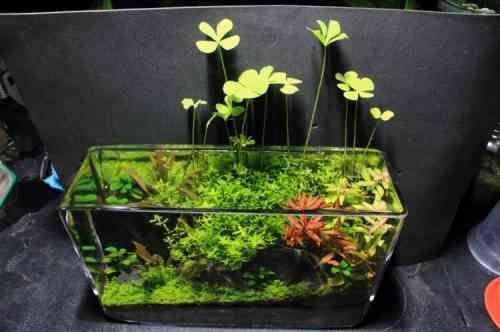17 best ideas about petit aquarium on pinterest aquarium poisson aquarium design and poissons. Black Bedroom Furniture Sets. Home Design Ideas
