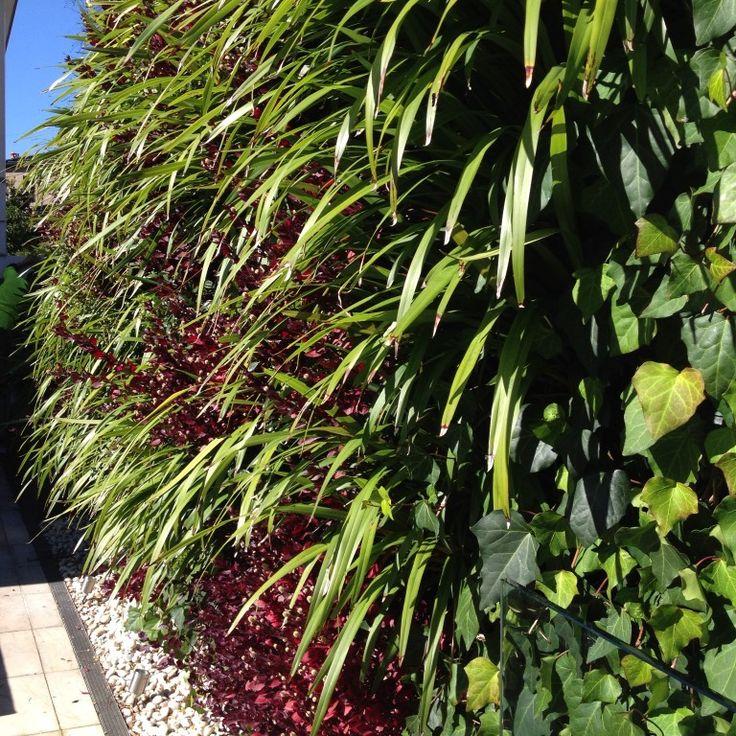 vertical garden balmoral 5-140