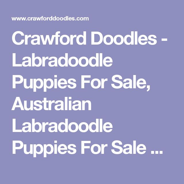 Crawford Doodles - Labradoodle Puppies For Sale, Australian Labradoodle Puppies For Sale Arizona, Mini Labradoodle Puppies For Sale