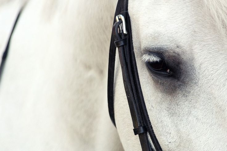 white horse by Antje Braun on 500px