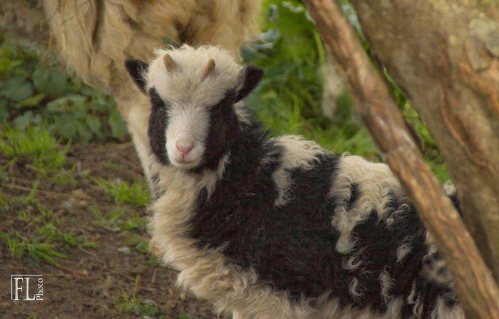 Domaine du Martinaa : Elevage, Gourmandise, Jardinage et Partage: Naissances animaux 2014 Martinaa