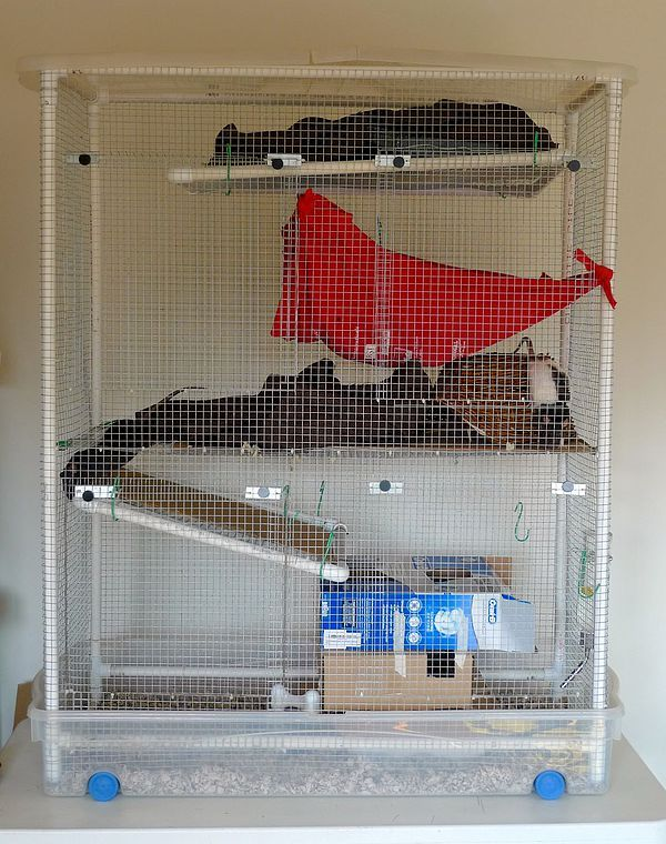 Pvc And Wire Rat Cage Diy