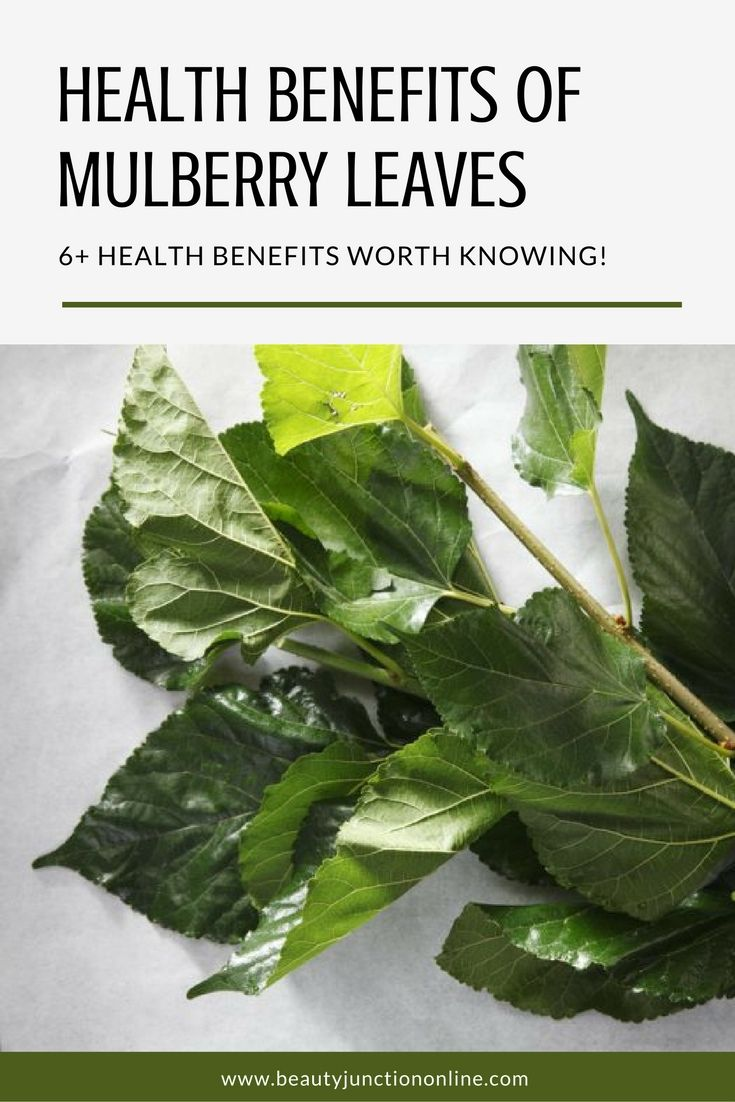 Discover the best health benefits of mulberry leaves!