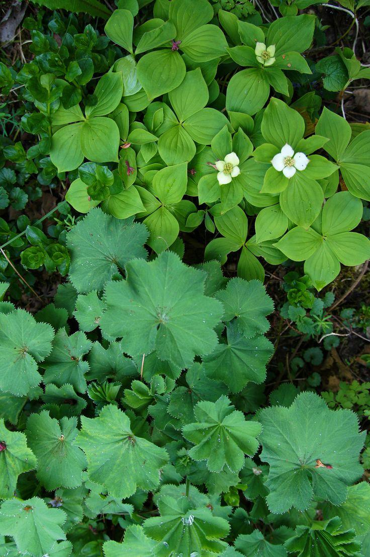 17 beste idee n over groenblijvende tuin op pinterest groenblijvende landschap bloeiende - Foto droge tuin ...